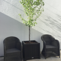 Extra Large Metro Planter Box with tree and chairs